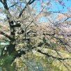 四ノ宮川まで徒歩1分